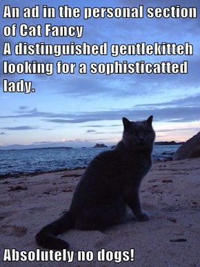 An ad in the personal section of Cat Fancy                                                                                    A distinguished gentlekitteh looking for a sophisticatted lady.  Absolutely no dogs!
