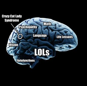 The brain of a lolaholic