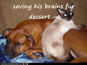 saving his brains fur dessert →