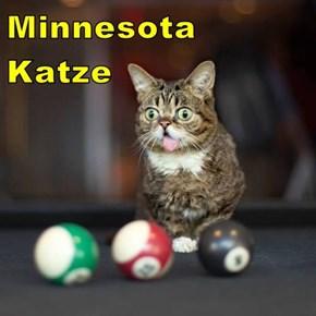 Minnesota Katze