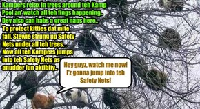 Many Kamper kitties take to teh trees arownd teh Pool.. Dey can relax dare an' catch a naps or three.. An' dey also haz great funs jumpin' into teh Safety Nets dat Stewie put up underneaths..