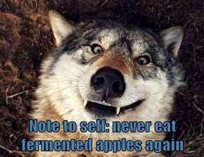Note to self: never eat fermented apples again