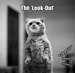 Why cats never get caught being bad!