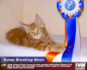 Kamp Breaking News - Kamp Lifegard Ginger Snaps haz been awarded Outstanding Lifegard of teh Week for sabin' many boy kitties, includin' Dexter Trump an' new Kamper Robin Banks from Feral Island!