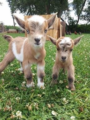 A Couple of Cute Kids