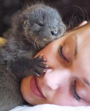 I Otter Kiss You Right on the Face