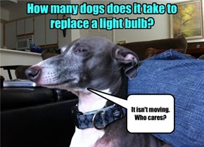 How many dogs does it take to replace a light bulb?