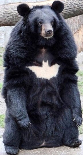 Bat Bear Could Take Down Superman
