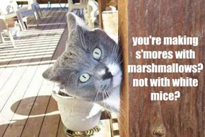 you're making s'mores with marshmallows? not with white mice?