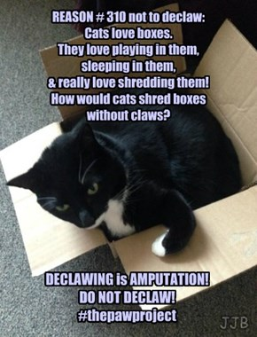Cats & Boxes & Boxes & Cats!