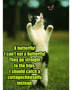 A butterfly! I can't eat a butterfly!  They go straight  to the hips. I should catch a cottagecheesefly instead.