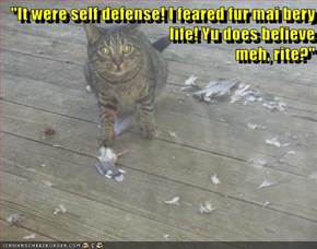 """It were self defense! I feared fur mai bery life! Yu does believe                                                                                     meh, rite?"""