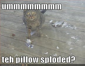 ummmmmmmm  teh pillow sploded?