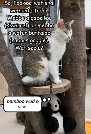 So, Pookee, wat shal we huntz todai.  Mebbe a gazellee (skwirrel) or mebbe a watur buffaloz (nabors goggie).  Wat sez u?