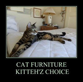 CAT FURNITURE  KITTEH'Z CHOICE