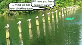 I think Bill has been drinking again.