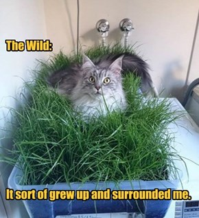 The Wild:           It sort of grew up and surrounded me.