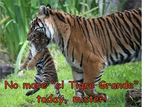 "No more ""el Tigre Grande"" today, mister!"