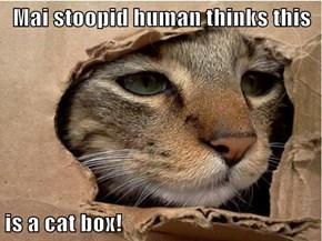 Mai stoopid human thinks this  is a cat box!