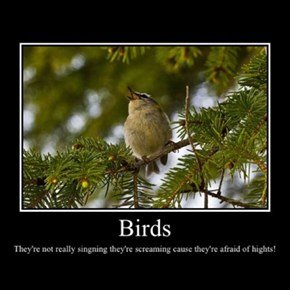 Birds, They Make Perfect Sense