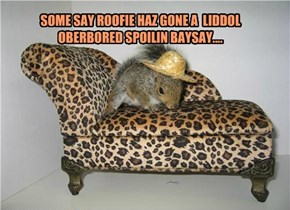 SOME SAY ROOFIE HAZ GONE A  LIDDOL OBERBORED SPOILIN BAYSAY....