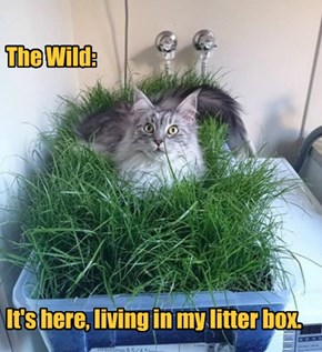 The Wild:          It's here, living in my litter box.