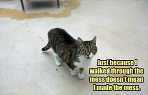 SURE. Blame The Cat