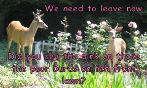 We need to leave now.  Did you see the pink on those the poor burds on teh front lawn?