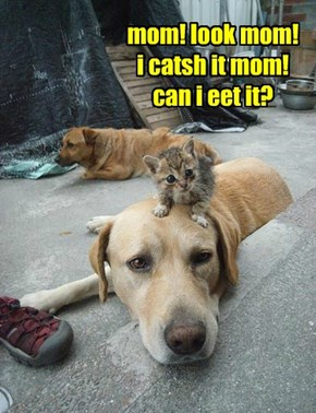 mom! look mom! i catsh it mom! can i eet it?