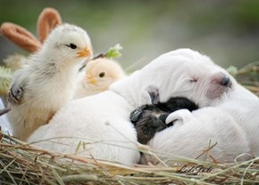 The Chicks are Envious of This Snuggle Party