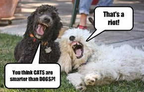 Dogs don't find anything funnier than this.
