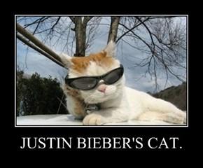 JUSTIN BIEBER'S CAT.