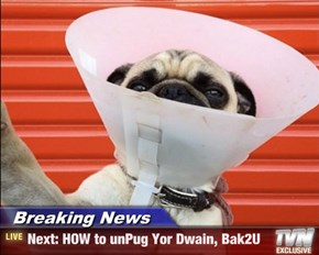 Breaking News - Next: HOW to unPug Yor Dwain, Bak2U
