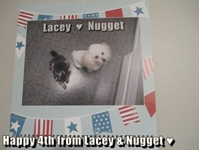 Happy 4th from Lacey & Nugget ♥