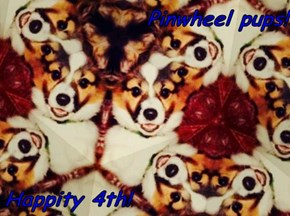 Pinwheel pups!   Happity 4th!