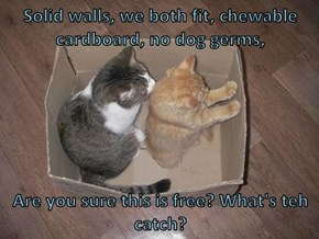 Solid walls, we both fit, chewable cardboard, no dog germs,  Are you sure this is free? What's teh catch?
