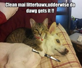 Clean mai litterbawx,udderwise da dawg gets it !!
