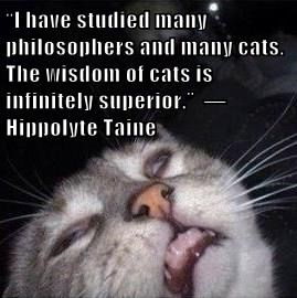 """I have studied many philosophers and many cats. The wisdom of cats is infinitely superior.""  ― Hippolyte Taine"
