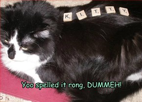 Yoo spelled it rong, DUMMEH!