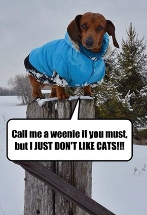 Call me a weenie if you must, but I JUST DON'T LIKE CATS!!!
