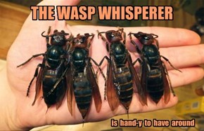 THE WASP WHISPERER