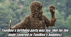 Happy birthday, ToolBee!
