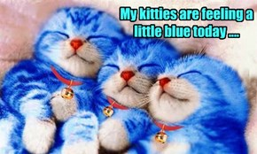 My kitties are feeling a little blue today ....
