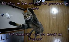 He flies in teh air wif teh greatest of ease                                              Teh beautiful cat, he needs no trapeze!