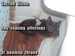 Sacred  Kitteh  nau  septing  offerings at  hooman  throne