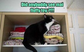 Did anybuddy see mai fluffy toy ?!!!