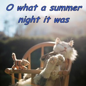 O what a summer night it was
