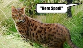 """Here Spot!!"""