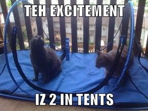 TEH EXCITEMENT   IZ 2 IN TENTS
