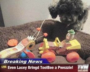Breaking News - Even Lacey Bringd ToolBee a Pwezzie!